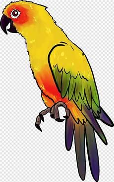 Parakeet Gambar Burung Nuri Animasi Hd Png