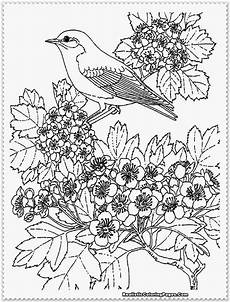 beautiful coloring pages realistic coloring pages