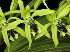 Gambar Bunga Anggrek Paling Indah Gambar Foto Wallpaper