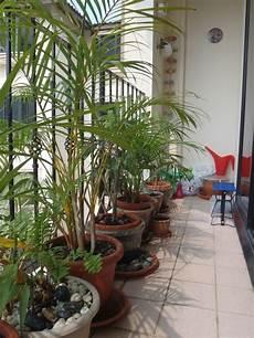 pflanzen holz und alu sichtschutz fuer den sichtschutz f 252 r den balkon varianten aus holz pflanzen