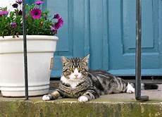 welche giftige zimmerpflanzen f 252 r katzen sind gar nicht