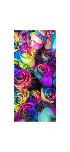 Iphone X Max Flower Wallpaper by 30 Cool High Quality Iphone Xs Max Wallpapers