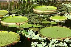teich der lotosbl 252 ten foto bild pflanzen pilze