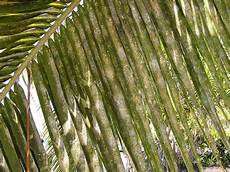 how to protect your palm trees from pests and disease