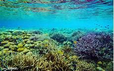 Diving Di Raja At Melihat Keindahan Bawah Laut Yang