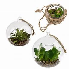 dekoration zum aufhängen deko sukkulenten in glaskugel zum aufh 228 ngen geschenkidee de