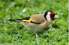 vogelwelt im eigenen garten singv 246 geln im garten helfen florilegium