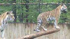animal worksheets in 13905 ross park zoo binghamton all you need to before you go updated 2018 binghamton ny