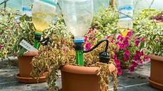 pflanzen während urlaub bewässern pflanzenbew 228 sserung durst 173 l 246 scher f 252 r den urlaub gabot de