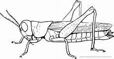 Insekten Ausmalbilder Gratis Ausmalbilder Insekten Ausmalbilder