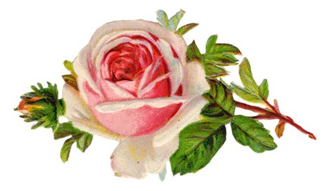 Roses Free Vintage Rose Clip Art Free Pretty Things For