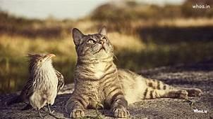 Sitting Cat With Sparrow HD Desktop Wallpaper