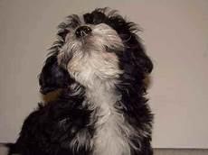 Entfernen Kaugummi Hundepfote Growborrow