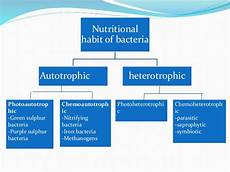 nutrition cultivation and isolation of bacteria