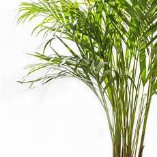 schlafzimmer pflanzen gesund diese pflanzen solltest du im schlafzimmer haben