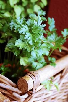 conserver herbes aromatiques conserver les herbes aromatiques fra 238 ches plus longtemps