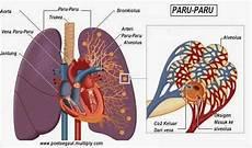 Belajar Dan Mengajar Organ Organ Tubuh Manusia