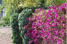 bepflanzung vor einer mauer astuces et conseils entretien jardin en 233 t 233