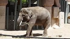 am zoo un dia en el zoo madrid 2016