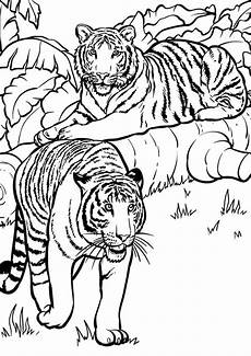 free easy to print tiger coloring pages tulamama