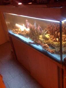 fische aquarien tieranzeigen seite 9
