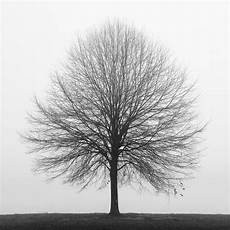 Black And White Photography Tree Photography Winter