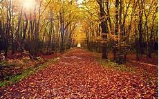 Nature Path 4k Wallpaper by Forest Path Wallpaper Hda4 Hd Desktop Wallpapers 4k Hd