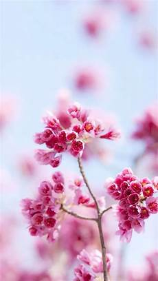 iphone x flowers wallpaper hd pink flowers iphone 5s wallpaper iphone
