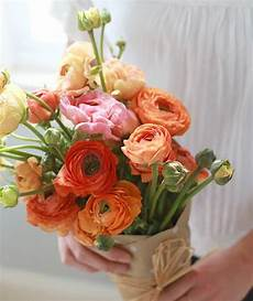 Foto Bunga Mawar Cantik Gambar Bunga Hd
