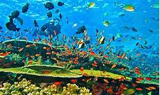Welcome To My Pentingnya Menjaga Ekosistem Laut