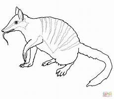 Malvorlagen Zum Ausdrucken Wombat Ausmalbild Australischer Numbat Ausmalbilder Kostenlos