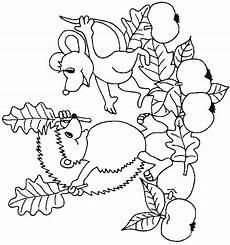 Igel Ausmalbild Erwachsene Malvorlagen Herbst Igel Ausmalbilder F 252 R Kinder