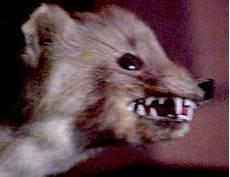 une martre peut tuer un chat de la p 233 dagogie 224 la futilit 233 ma fouine gestapo