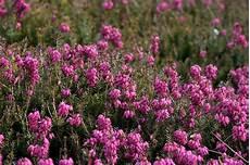 fiori di bach menopausa fiori di bach in menopausa menopausa