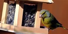 vogelfutter selber machen tannenzapfen vogelfutter selber machen