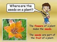 plants lesson ks1 13726 schools science cycles worksheet biology hs worksheets