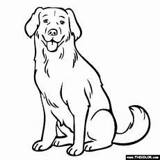 labrador coloring page yellow lab chocolate lab puppy