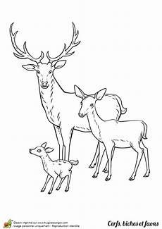 cerf dessin facile dessin 224 colorier cerf biche et faon en famille