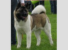Working Dog Breeds at Fox College   StudyBlue