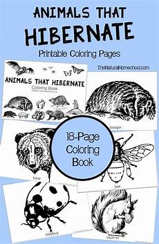 free printable coloring pages hibernating animals 17014 1000 images about worksheets printables for pre k to second grade on homeschool