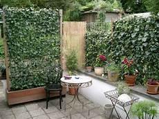 immergrüne pflanzen sichtschutz efeu im holztrog und eingepflanzt als terrassensichtschutz