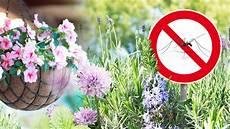 Stechmücken Bekämpfen Schlafzimmer - hausmittel gegen m 252 cken diese 7 pflanzen vertreiben