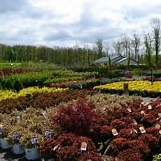gardening hamburg gullo s garden center 29 photos 13 reviews nurseries