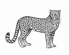 Kostenlose Malvorlage Gepard Ausmalbilder Tiere Zum Ausdrucken Seite 3 4