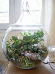 Un Terrarium La Touche D 233 Co Pour Les Plantes Dans La Maison