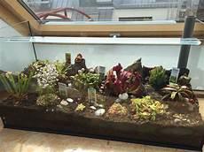 fleischfressende pflanzen terrarium selbst gebaut
