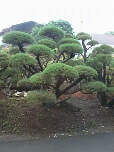 Jasa Pembuatan Taman Renovasi Taman Taman Indah