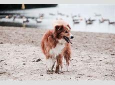 [FOTOVERZ] De leukste kruisingen! (Honden) ? Bokt.nl