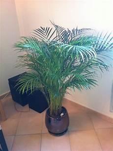Plante Interieur Pas Cher Plante D Int 233 Rieur Pas Cher Fleuriste Bulldo