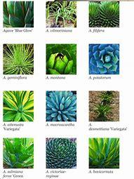 Image result for garden plant identification chart